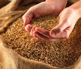Продам очищенную пшеницу 3-4 класс