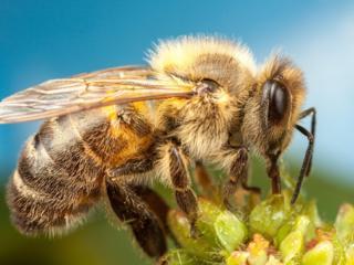 Куплю пчелосемьи.