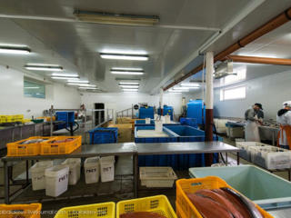 HANSEATIC- Рыбоперерабатывающий завод. Польша.