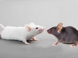 Избавлю от крыс и мышей