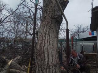 Спил деревьев любой сложности! )