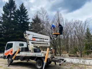 Tăierea copacilor şi crengilor problematice cu utilaje şi echipamente