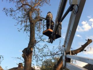 Tăierea copacilor şi crengilor problematice. Curatarea Tuilor!