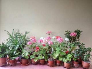 Продам. Растения молодые, здоровые. Есть выбор. Цена договорная.