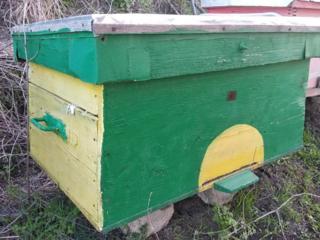 Stupi pentru albine harnice