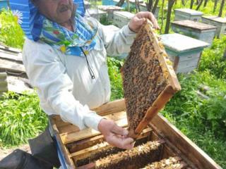 Пчелосемьи, отводки, пчелопакеты