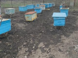 Продам улики для пчел