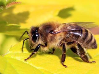Куплю пчел (семьи, отводки).