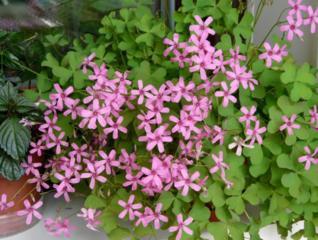 Куплю цветы