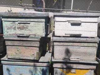 Продам улья лежаки, от 100 до 300 руб. Обмен на пчел.