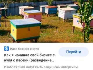 Продам пасеку и пчелосемьи.