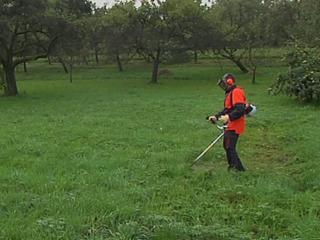 Cosim iarba, tăiem copaci