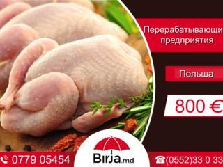Работа на мясокомбинате с зарплатой 800 евро в месяц.