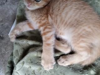 Чудесные котята ищут любящих хозяев