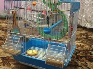 Colivii pentru papagali