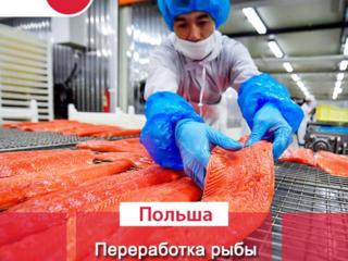 Открыта вакансия на рыбное предприятие MOWI, г. Устка, Польша.