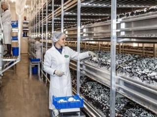 GLOBAL – Теплицы по выращиванию грибов. Польша.