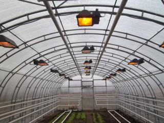 Теплицы по выращиванию грибов набирают сотрудников! 1000 евро в месяц!