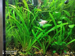 Продаются аквариумные растения