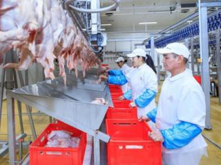 Стабильная работа и зарплата. Фабрика по переработке мяса.