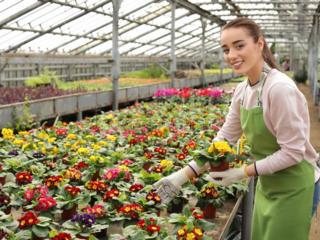 Работа в Германии. Теплицы декоративных растений нуждаются в рабочих.
