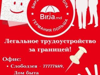 Компания BIRJA. MD предлагает официальное трудоустройство в Европе!