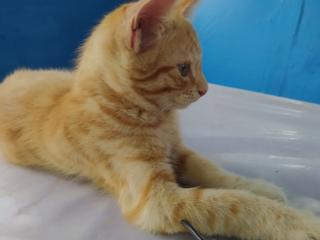 Бесплатно отдам в хорошие руки рыжего котика 3 месяца /04.04.21г. /