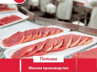 Работа. Завод по переработке мяса. Польша.