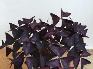 Vind flori de camera si oficiu/ Комнатные растения для офиса и дома