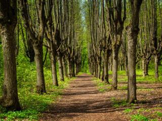 Пилю деревья любой сложности быстро качественно