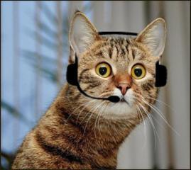 Call-Оператор в офис
