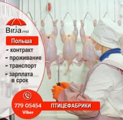 Работа на переработке мяса птицы. Работа в Польше.