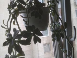 Денежное дерево, сукуленты, монстера, роза, кактусы и др.