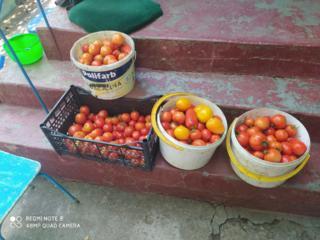 Продам помидоры 10руб за кг