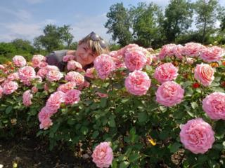 Большой выбор саженцев роз и многое другое