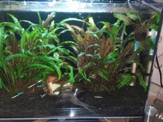 Продам аквариум 30 литров с рыбками и с растениями!!!
