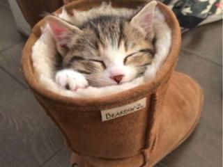 Кот на передержку / кэтситтер / гостиница временный дом для кошки