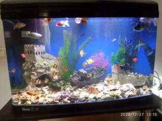 Продам заводской аквариум JEBO 140 л. Недорого 2000р