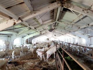 Требуются разнорабочие на козью ферму