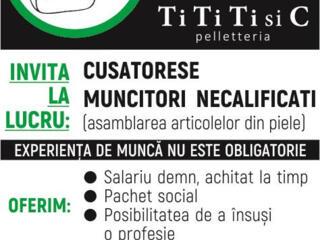 Compania Moldo-italiana angajeazaPersonal necalificat