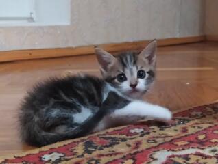 Забавный и ласковый котенок-мальчик ищет семью