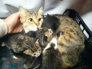 Подарю красивых и ласковых котят