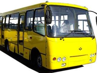 Водители категории D 25000