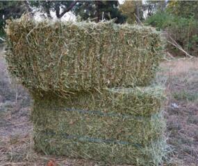 Куплю сено люцерны, овсяное сено и прочие в количестве 200-300 тюков.