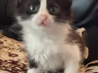 Подарю котенка - центр города