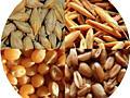 Пшеница. Ячмень. Кукуруза. Комбикорм. Горох. Солома.