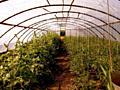 Продам соления и другие овощные деликатесы