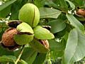 Грецкий орех. Nuci. Walnut kernels Extra Class. Продаем оптом, экспорт