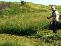 Косим траву, любой вид травы и твердой породы. +Распилка дров.