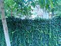 Фонтанка 6 сот. правильной формы, ул. Патриотическая, морская сторона